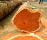 Padouk Industrial Logs, 2-4'