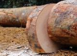 工业用木, 加蓬圆(盘)豆木