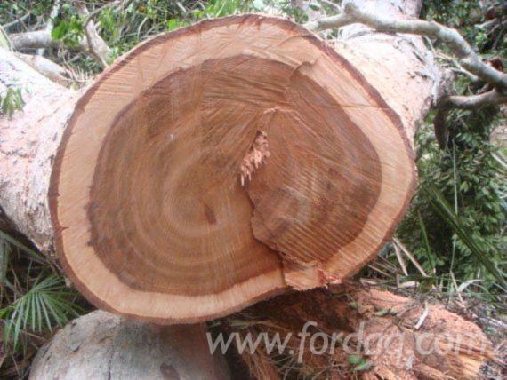 Moabi-Industrial-Logs-for-Sale