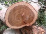 Stämme Für Die Industrie, Faserholz, Moabi