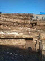 Comprar Troncos Serrados Eucalipto China
