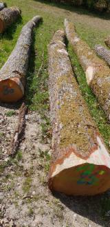 Oak Saw Logs, 30-39+ cm