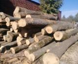 -- cm Brown Ash Saw Logs from Romania, Botosani