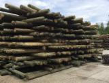 Vender Madeira Redonda De Formato Cónico Pinus - Sequóia Vermelha Polônia