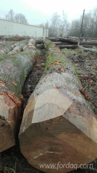 Oak-Saw-Logs-From-France