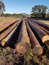 null - Słupy, Palisady, Pale, Tasmanian Oak, Eukaliptus , Ironbark