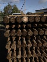 Paliki, Sosna Zwyczajna - Redwood, Świerk - Whitewood