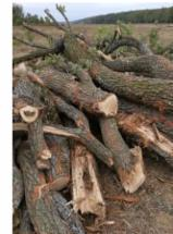 Cele mai noi oferte pentru produse din lemn - Fordaq - SC TONNELLERIE MARGO SRL - Lemn de foc