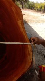 Kerestelik Tomruklar, Acajou D'afrique , Tik Ağacı