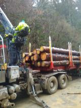 Spruce/Pine Saw Logs, 25+ cm