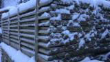 Kiefer - Föhre, Fichte , Garteneinfassung