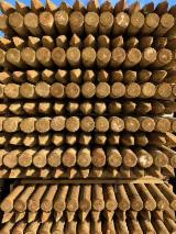 Paliki, Świerk - Whitewood, Sosna Zwyczajna - Redwood