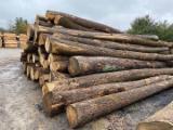 USA Ash Saw Logs (2SC), 7'+