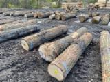 USA Red Oak Veneer Logs, 7'+