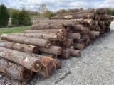 USA Black Walnut Saw Logs (2SC/3SC), 7'+
