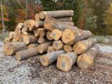 USA Hard Maple Veneer Logs, 8'+