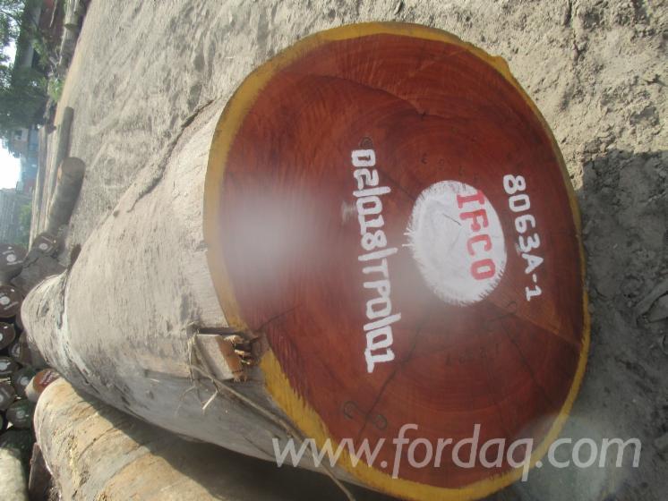 Vendo-Tronchi-Da-Sega-Acajou-D%27afrique-Dem--Rep--Congo