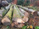 FSC Beech Saw Logs, 30-60 cm