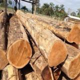 Red Oak/White Ash Saw Logs, 10-60 cm