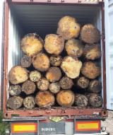 Vend Grumes De Sciage Epicéa - Bois Blancs