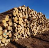 Spruce Saw Logs, 3.8-5.8 m