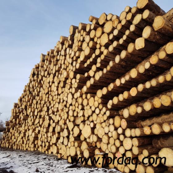 Vender Troncos Serrados Abeto - Whitewood Lituânia