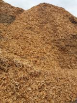 Сосна Звичайна Дерев'яні Чіпси Від Пиляння Польща