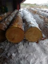 Pine Lumber from Large Logs, Shop Graded 5/4