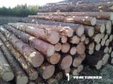 Vender Troncos Serrados Abeto , Pinus - Sequóia Vermelha, Abeto - Whitewood Lituânia