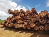 Vindem Bustean Industrial Basralocus , Maçaranduba , Wacapou