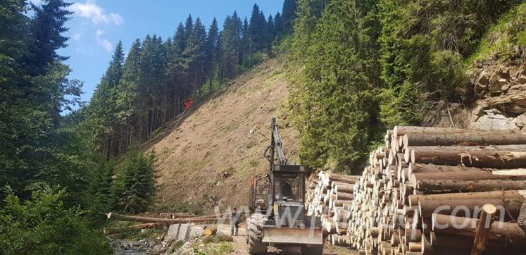 Forstpflege
