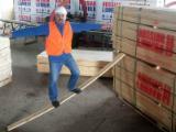 Embalagens de madeira Abedul Forno Seco (KD) À Venda North-West