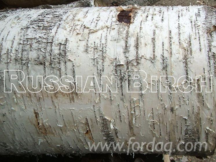 Vender Lenha / Troncos Clivada Abedul North-West Rússia