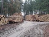 Spruce/Pine/Larch Saw Logs, 3-12 m