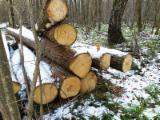 Tilia Saw Logs, A/B, 26+ cm