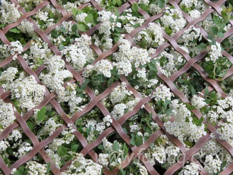Плетёные панели  из натурального дуба, бука и ясеня