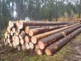 Vender Troncos Serrados Abeto - Whitewood Letônia