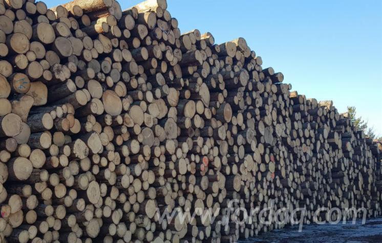 Pine Saw Logs, ABC, 2.9+ m