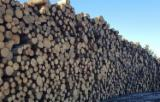 Vender Troncos Serrados Pinus - Sequóia Vermelha Letônia