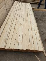 Vender Pinus - Sequóia Vermelha 15-60 mm