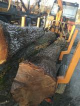 锯木, 核桃