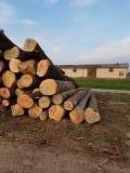 White Ash Saw Logs, ABC Grade, 25+ cm
