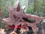 Vender Troncos Serrados Angelim Pédra, Basralocus , Ipe Suriname