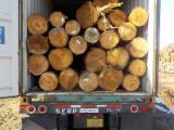 Southern Yellow Pine Industrial Logs, 20+ cm