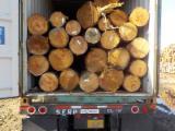 Vender Troncos Industriais Pinheiro Amarelo Do Sul EUA 美国佐治亚