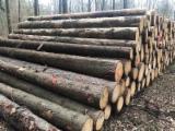 Comprar Troncos Serrados Abeto - Whitewood Polônia