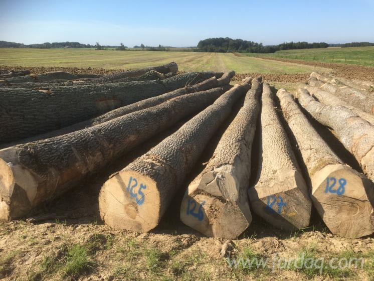 European-Ash-Logs--40--cm-diameter