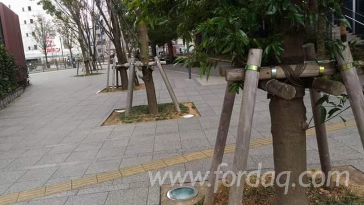 Eucalyptus Poles A/B