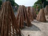 Find best timber supplies on Fordaq - Gia Tran Wood - Wood poles size 8x200 cm