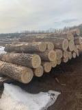 木皮单板原木, 蜡树